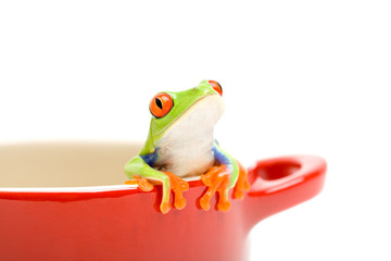 frog looking out of pot
