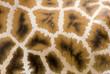 Giraffen Muster Hintergrund