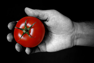 Red tomato on hand