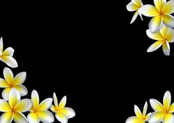 Composition de fleurs de frangipanier