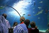 Erlebnis SEA LIFE Aquarium poster