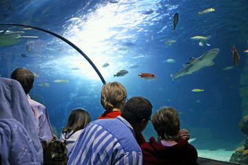 Erlebnis SEA LIFE Aquarium