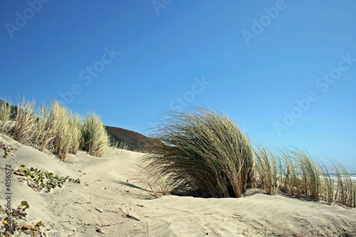 Reeds bent in the wind at the beach