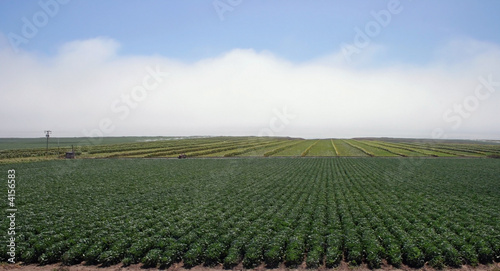 Green farm land below white cloud blanked