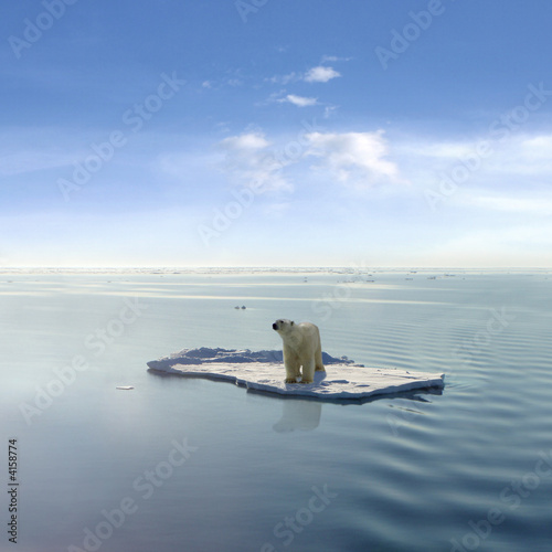 Fotobehang Ijsbeer The last Polar Bear