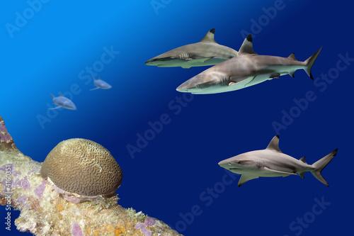 Sharks2Reef