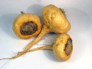 maca - lepidium meyenii