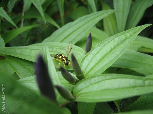 Yellow bee on a leaf