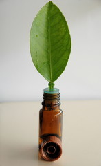 Fresh leaf and bottle of oil