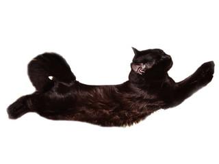 Cat-acrobat
