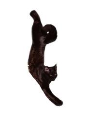 Cat-acrobat 2