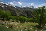 Himalaya landscape poster