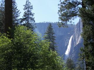 yosemite falls through the pines
