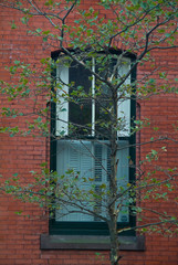 Colonial era window and tree