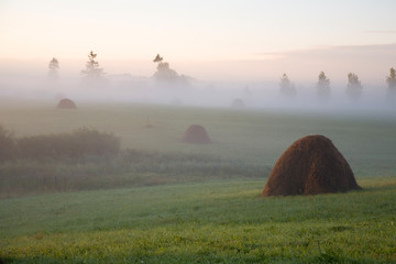 Rural field in the morning