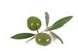 olive 46