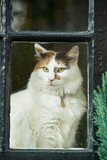 Cat sitting on window sill poster