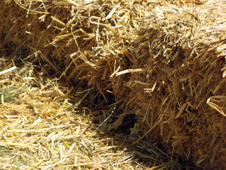 Yellow Dry Hay on the Sun