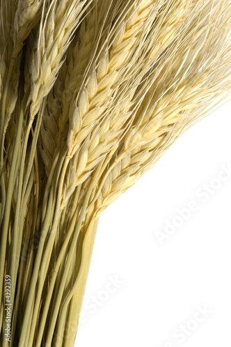 Wheat on White