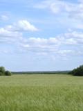 plain landscape 1 poster