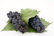 Dark grape with leaf