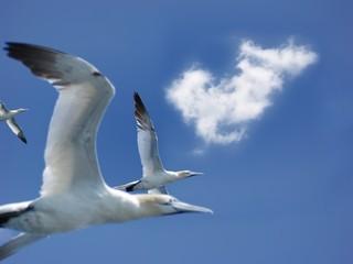 vol d'oiseaux dans le ciel