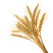 Wheat ears - 4236163