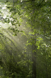 Sun rays shine through branches and green leaves poster