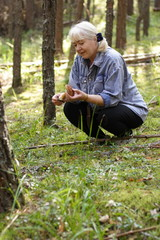 Collecting of mushrooms in a  pine forest