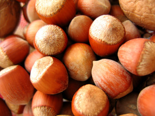 closeup of hazel nuts background