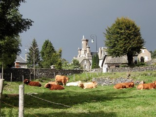 Village de Salers et ses vaches