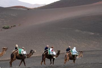 camel line in desert