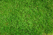green grass background - 4256318