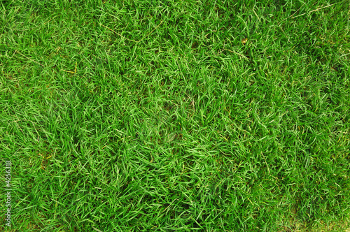 Leinwandbild Motiv green grass background