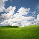 Green field Landscape
