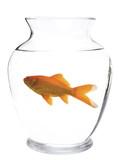 small aquarium poster