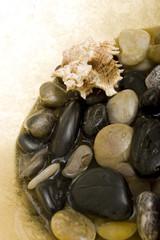 Seashell on spa stones