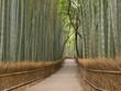 Kyoto Bamboo grove