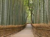 Fototapety Kyoto Bamboo grove