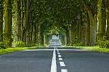 Drzewa wzdłuż drogi - 4269755