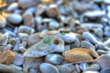 Stones and seashell