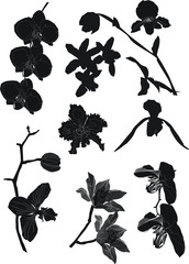 orchid silhouettes collection