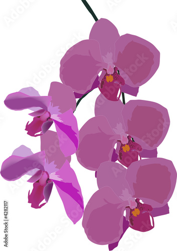 decoration with pink orchid