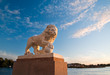 imperial lion at sunset