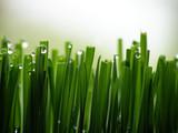wet green grass - 4286564