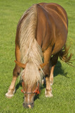Horse grazing 2 poster