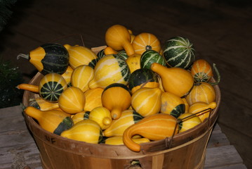 bushel of gourds