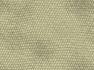 Textura Fondo Animal reptil