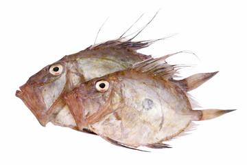 Sogliola Fish - Dover Soles