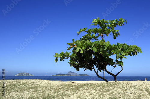 ipanema tree